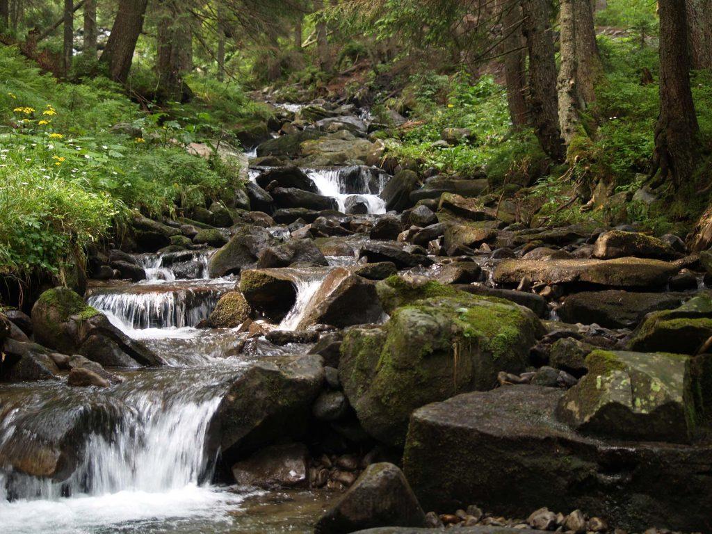 beneficii petrecerii timpului natura